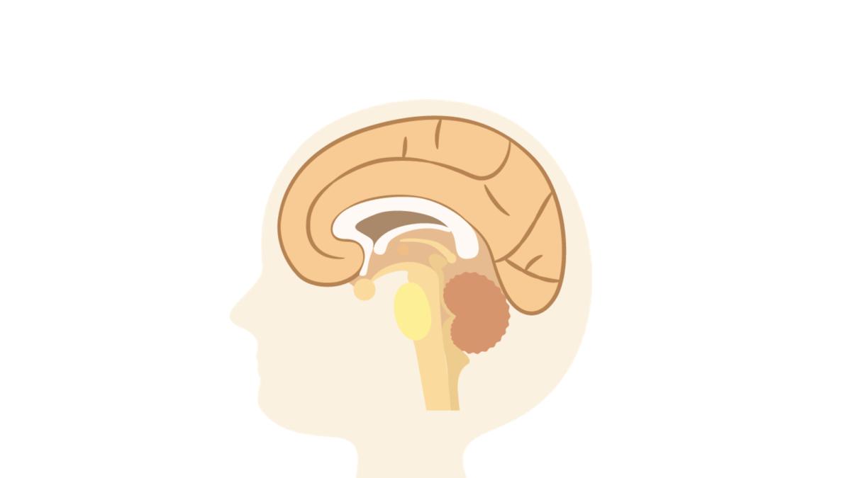 油で脳を活性化